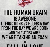 How The Human Brain Usually Works