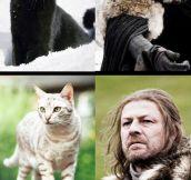 The Cat Of Thrones