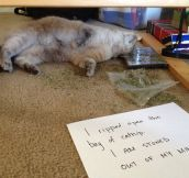 Perhaps This Cat Needs An Intervention