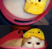 He's Got His Bath Hat On