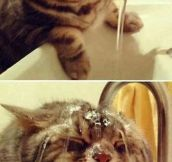 Cat + Water = Pure Happiness?