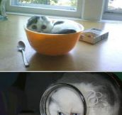 Why Cats Are Really Liquids