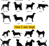 The Way We See Dogs