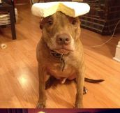 Apparently You Can Put Anything In This Dog's Head