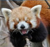 Animals Who Can't Contain Their Laughter