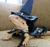 Lizard The Wizard