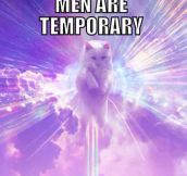 Kitties Vs. Men