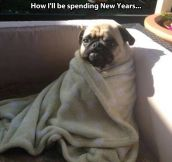 Just Like This Pug