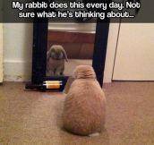 Introspective Rabbit