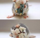 Rats With Cozy Teddy Bears