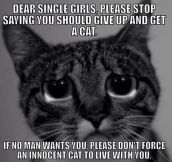 To All The Single Ladies Out There