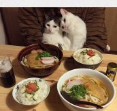 Kitty Date