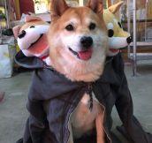 Cerberus Doge