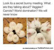 Secret Bunny Meeting