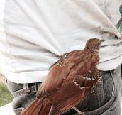 Here's How I Got My New Guard Bird