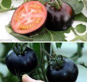 Dark Tomatoes