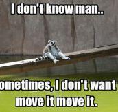 Introspective Lemur