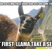Photogenic Llama