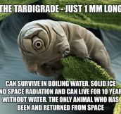 Meet The Strange Tardigrade