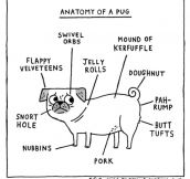 The Anatomy Of A Pug