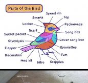 Animal Anatomy Explained