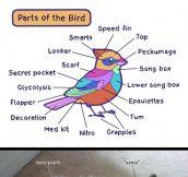 Animal Anatomy Explained