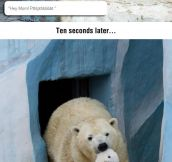 Disrespectful Polar Bear