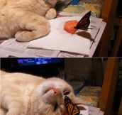 Hello There Mister Butterfly