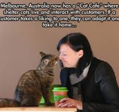 The Cat Cafe In Melbourne