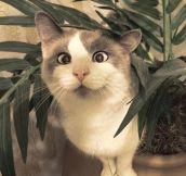 Strabismus Kitty