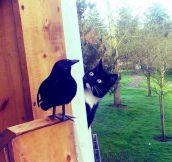 Curious Neighbor Kitty