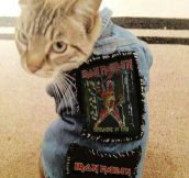 Metal Cat: Iron Meowden