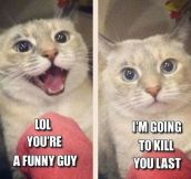Every Relationship With A Cat
