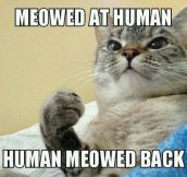 Cat People Will Understand