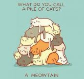 Proper Name For A Pile Of Cats