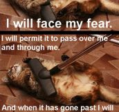 I Will Definitely Face My Fear