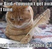 Dear Birdy