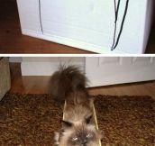 Kitties In Boxes