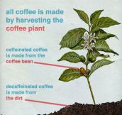 How Decaf Coffee Is Actually Made