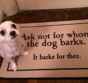 For Whom The Dog Barks