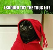 Seems He Chose The Thug Life