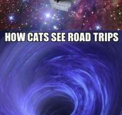 How Your Pets See Road Trips