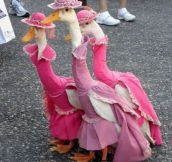 Let's Just Take A Moment To Appreciate These Custom Made Duck Dresses