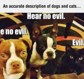 Dogs And Cats Described