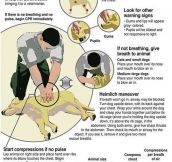 Every Dog Owner Should Know This