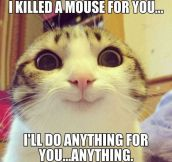 Overly-Attached Cat Is Obsessed