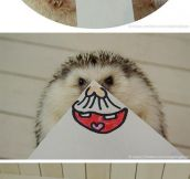 A Hedgehog's Many Faces
