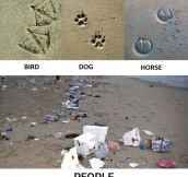Footprints Of Different Animals