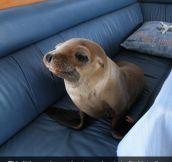 Intruder Seal