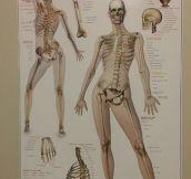 This Skeleton Is So Fabulous